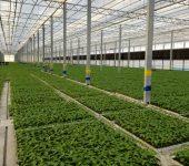 مدرنترین گلخانه هیدروپونیک با طرح ونلو هلند در اهر افتتاح میشود